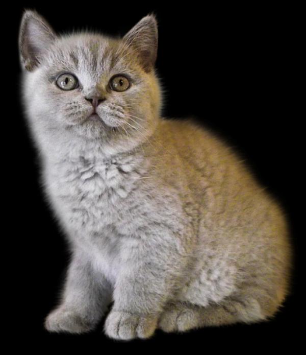 Sad Cat Png