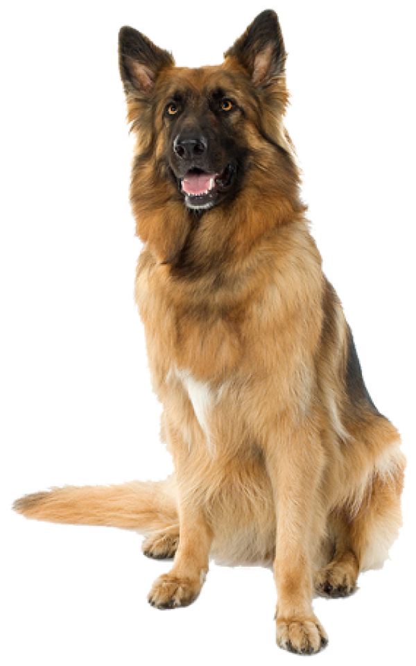 Shephard Dog Png