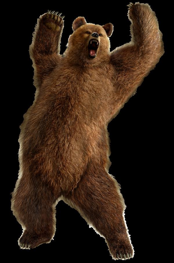 Shouting Bear Png Image