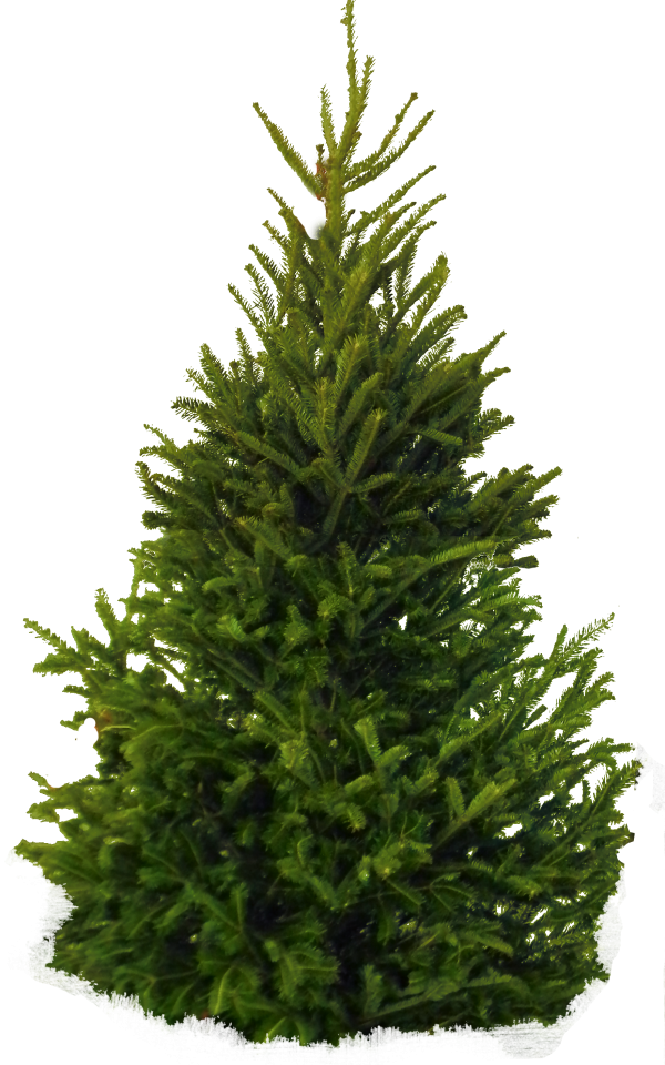Spiral Tree Png