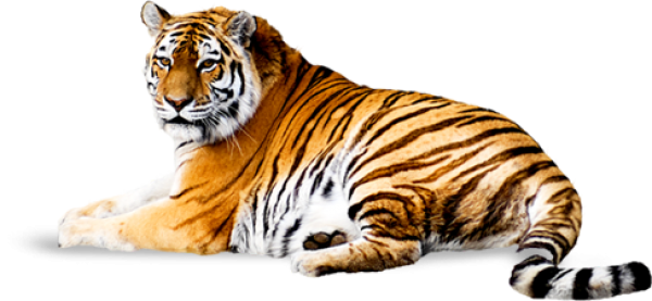 Tiger PNG Free Download 7