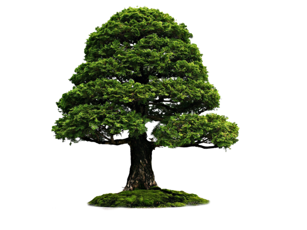 Tree On Grass Png