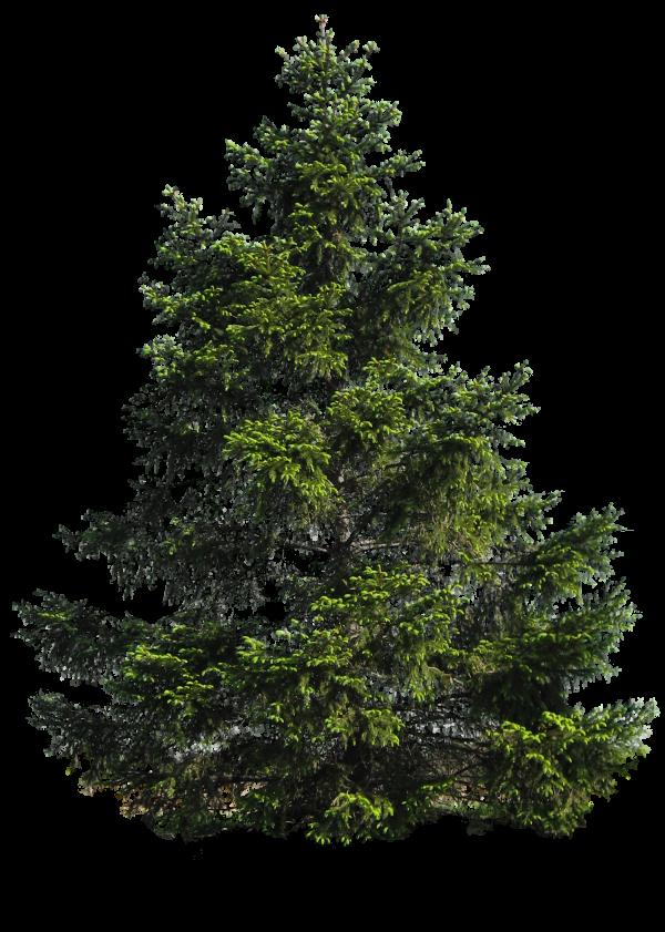 Tree Png Free Download