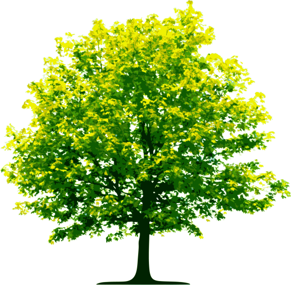 Tree Png Illustrator