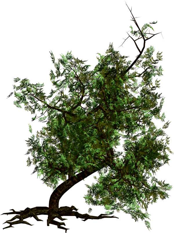Tree Png with Roots