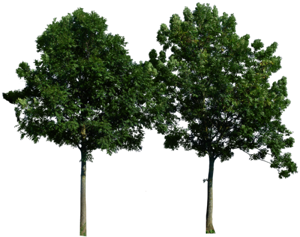 Two Png Tree