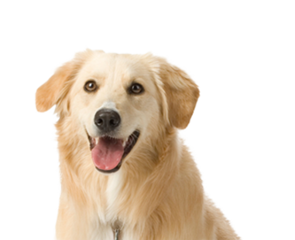 White Dog Face Png