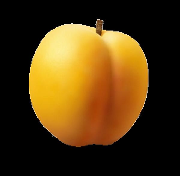 Yellowish Apricot Clipart