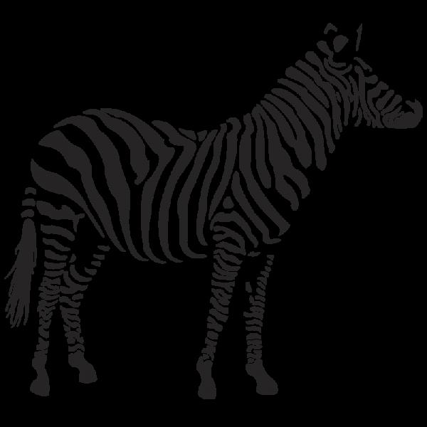 Zebra Standing Png Image