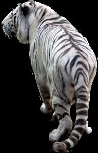 Tiger PNG Free Download 2