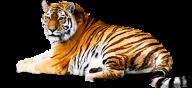 Tiger PNG Free Download 7