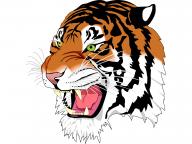 Tiger PNG Free Download 8