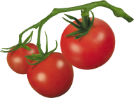 Tomato PNG Free Download 10