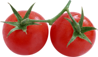 Tomato PNG Free Download 20