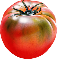 Tomato PNG Free Download 22