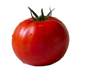 Tomato PNG Free Download 24