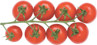 Tomato PNG Free Download 27