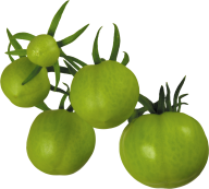 Tomato PNG Free Download 5