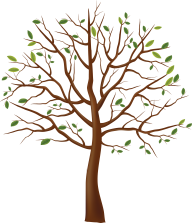 Tree Illustrator