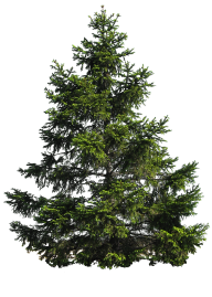 Tree Png Free Download