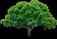 Tree Png Free Image