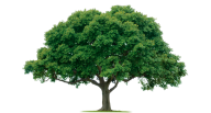 Tree Png Free To Download