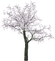 Tree With Flowers Png
