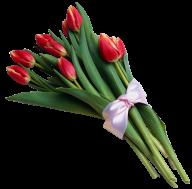 Tulip PNG Free Download 18