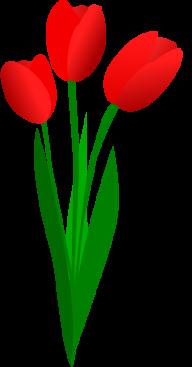Tulip PNG Free Download 30