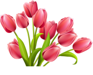 Tulip PNG Free Download 5