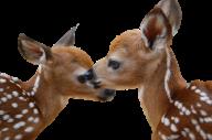 Two Deer Cubs Png