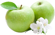 Two green Apple with Apple Flower and Leaves