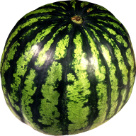 Watermelon PNG Free Download 19