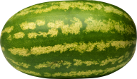 Watermelon PNG Free Download 30