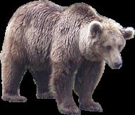 White Bear Png Free Download