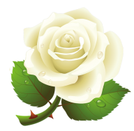 White Roses PNG Free Download 1