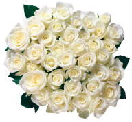 White Roses PNG Free Download 10