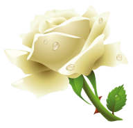 White Roses PNG Free Download 2