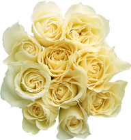 White Roses PNG Free Download 20