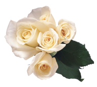 White Roses PNG Free Download 23