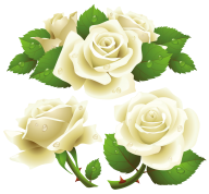 White Roses PNG Free Download 7