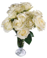 White Roses PNG Free Download 9