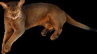 Wild Cat Png